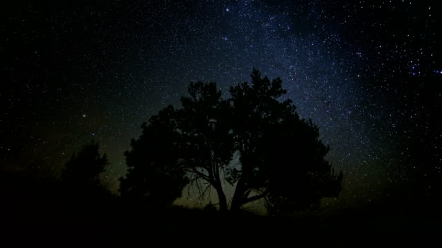 night to day lone western juniper with milky way dark sky stars at night in desert until dawn - oregon us state stock videos & royalty-free footage