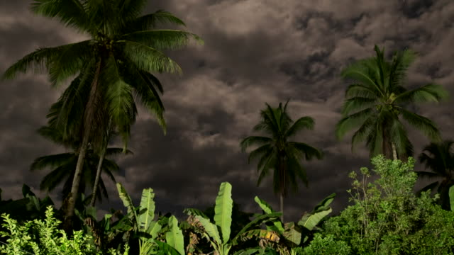 night to day view of stormy cloudscape and palm trees - papua stock videos and b-roll footage