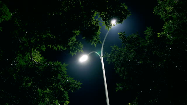 night tree and lamp - street light stock videos & royalty-free footage
