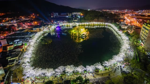night view of and cherry blossom road with tourists at yeonhwaji pond in gimcheon, gyeongsangbuk-do - north gyeongsang province stock videos & royalty-free footage