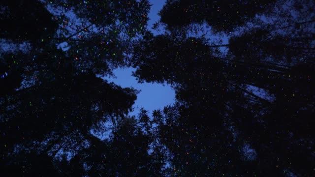 vídeos de stock e filmes b-roll de night view of bamboo grove at taehwa river simnidaesup - pirilampo escaravelho