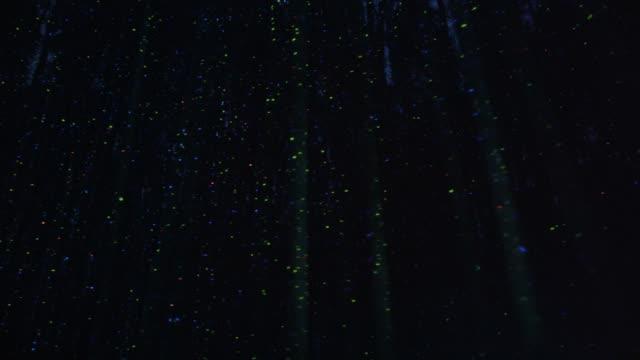 night view of bamboo grove at taehwa river simnidaesup - 蛍点の映像素材/bロール
