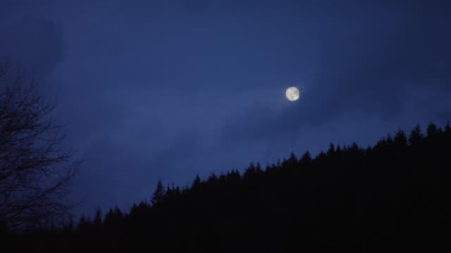 Nächtlichen Wald Szene mit Mond in der Abenddämmerung