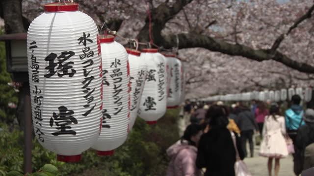 MS Ni-No-Torii with lanterns and cherry blossom on Danzakura pathway / Kamakura, Kanagawa, Japan