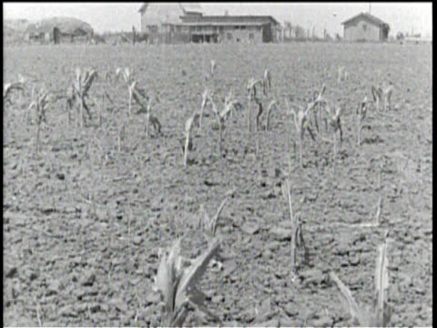 no audio / a farm house in a field / a family packs up their belongings / dying crops wither in the fields / farmers try to water them by hand /... - dust bowl stock videos and b-roll footage
