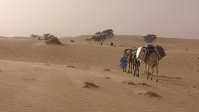 ws nomad leading camels in desert / chinghetti, adrar, mauritania - mauritania stock videos & royalty-free footage