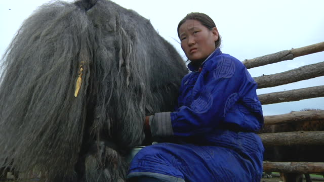 stockvideo's en b-roll-footage met ms nomad woman milking yak / central-south mongolia, mongolia - alleen één mid volwassen vrouw