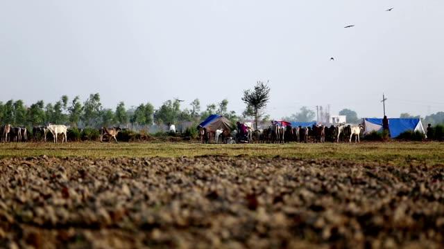 自然の中の遊牧民キャンプ - アジア野ロバ点の映像素材/bロール
