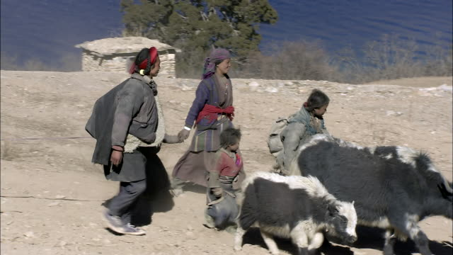 ws nomadic family passing by phoksundo lake with yak and horse / himalayas, upper dolpo, nepal   - arbeitstier stock-videos und b-roll-filmmaterial