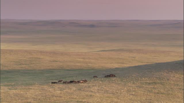 vídeos de stock, filmes e b-roll de nomadic herder and horses on steppe, mongolian steppe - montar um animal