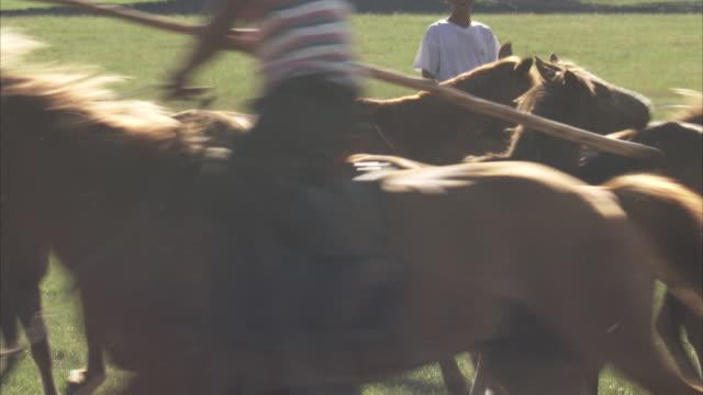 nomadic mongolian horse herders and their animals, inner mongolia  - przewalskihäst bildbanksvideor och videomaterial från bakom kulisserna