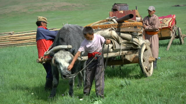 ms nomads finishing to prepare cart load that pulled by yak / central-south mongolia, mongolia - 遊牧民族点の映像素材/bロール