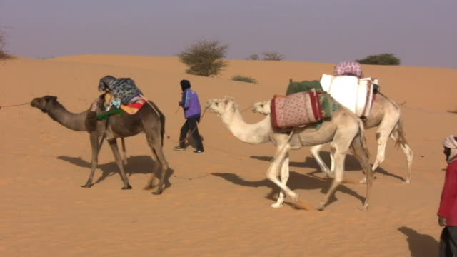 ws nomads leading camels in desert / chinghetti, adrar, mauritania - convoy stock videos and b-roll footage