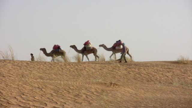 WS Nomads walking with camels in Sahara desert / Zouerat, Tiris Zemmour, Mauritania