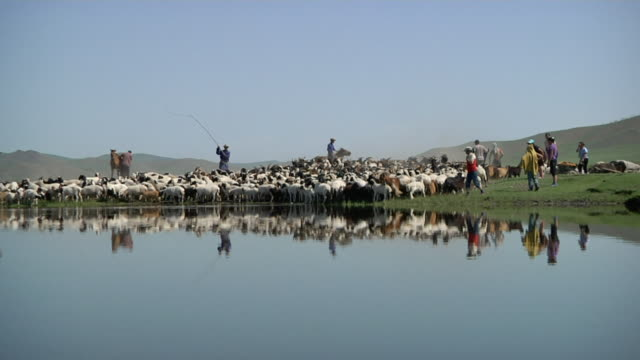 WS ZI Nomands organizing herd of sheeps and goats at bank of river / Central-south Mongolia, Mongolia