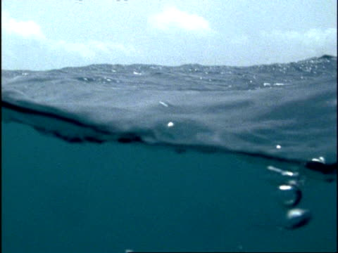 ms north atlantic ocean waves tracking down underwater, bermuda - below stock videos and b-roll footage