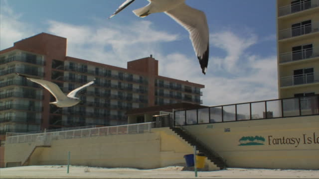 driving north down hard packed sand road parallel to south atlantic avenue tracking two seabirds flying in fg condos in bg seagulls birds beach shore - parallelo video stock e b–roll