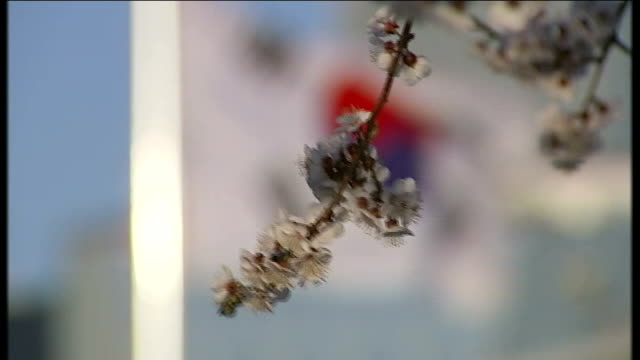 john kerry visits south korea / report suggests north korea may have nuclear capability south korea seoul ext close shot of blossom on treet with... - 2013年 北朝鮮の核実験点の映像素材/bロール