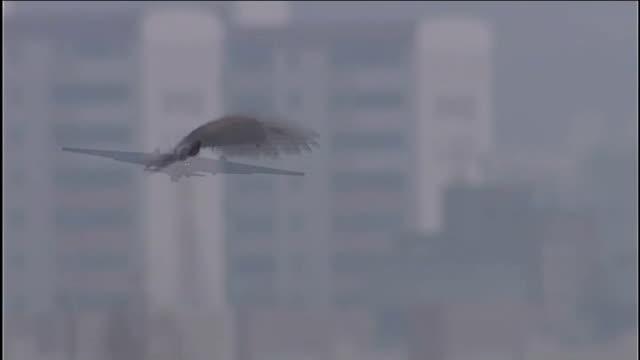 north korea warns diplomats as tensions continue to rise south korea osan air base hawk hovering u2 spy plane in flight - 2013年 北朝鮮の核実験点の映像素材/bロール