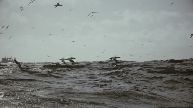 north sea birds diving into the sea: feeding frenzy - 無秩序点の映像素材/bロール