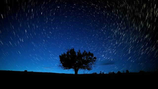 North Star Above Lone Juniper Tree and Blue Abstract Star Trails Night Time Lapse