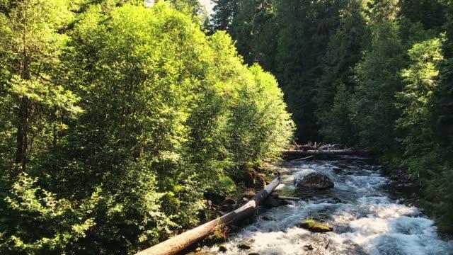 north umpqua river in oregon - umpqua national forest stock videos & royalty-free footage