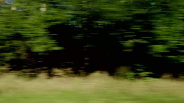 stockvideo's en b-roll-footage met north zealand vii gesynchroniseerde serie rechts weergave rijproces plaat - landvoertuig