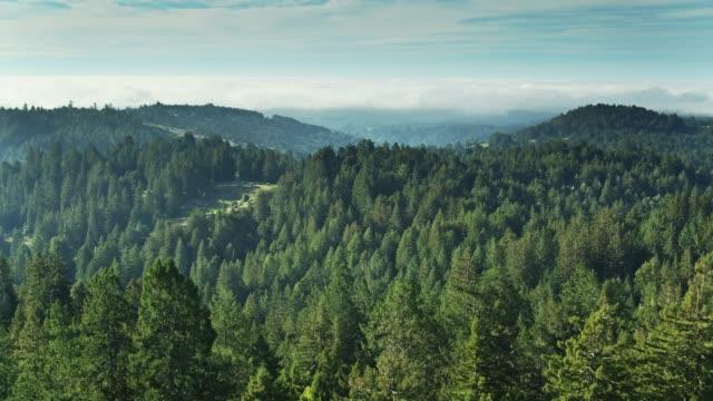 vídeos de stock, filmes e b-roll de floresta do norte de califórnia com o banco da névoa na distância-antena - sequoia sempervirens