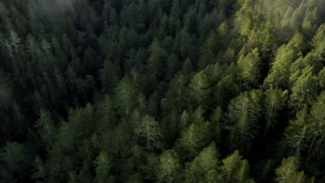 northern california redwood forest: aerial - california del norte stock videos & royalty-free footage