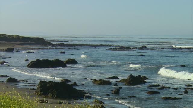 vídeos de stock e filmes b-roll de ws ha northern elephant seals (mirounga angustirostris) in pacific ocean waves near san simeon, california, usa - elefante marinho