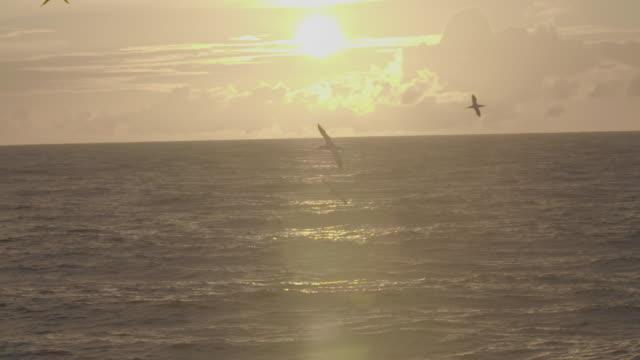 northern gannet bird flying over sea - northern gannet stock videos & royalty-free footage