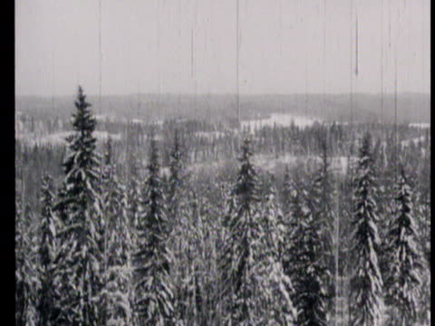 Northern Russia in winter with snowy landscape and pine forests / Russia AUDIO