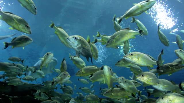 vídeos de stock, filmes e b-roll de nettle mar do norte - nettle