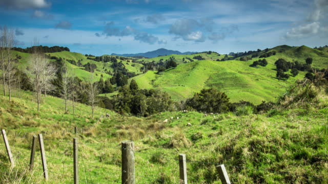 northland sheep farms in spring time - time lapse - fence stock videos and b-roll footage