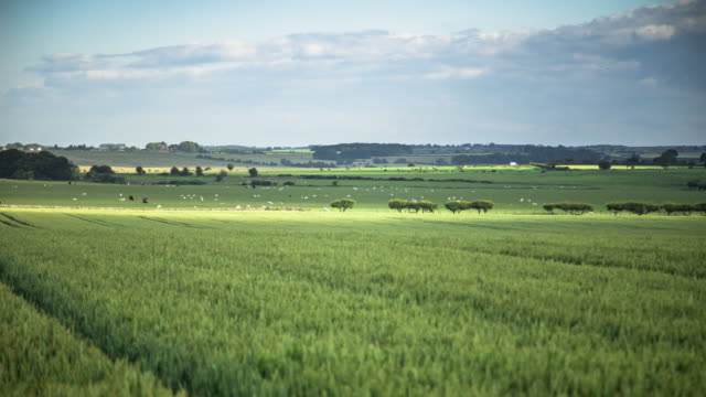 Northumberland Farmland - Zeitraffer