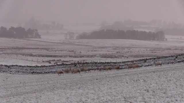 Northumberland wakes up to snow as forecasters warn of plunging temperatures and possible disruption