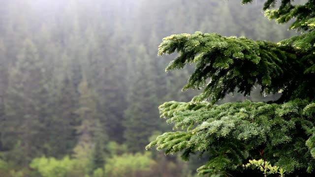 stockvideo's en b-roll-footage met northwest rain - oregon amerikaanse staat