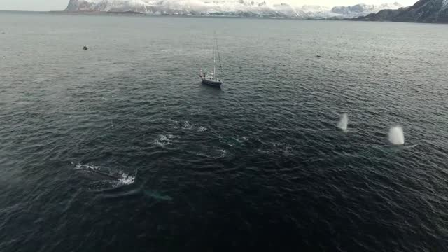 norwegian native berthold hinrichs spends the winter on the island of senja off the coast of norway. each year he goes out on his boat whale... - fin whale stock videos & royalty-free footage