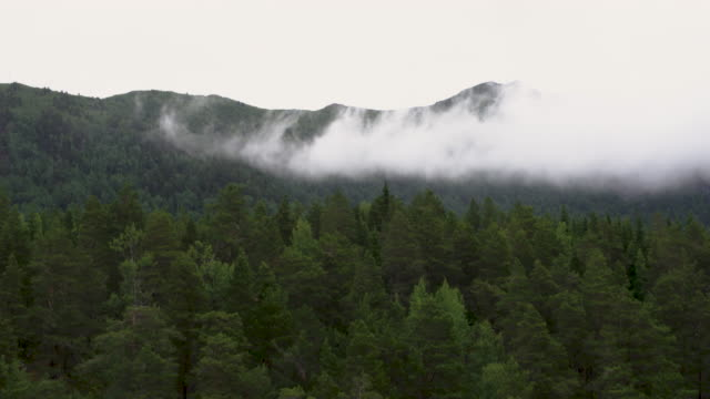 norwegian nature and forest on the west coast of norway - forest stock videos & royalty-free footage