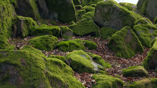nose-covered rocks in forrest - land stock-videos und b-roll-filmmaterial