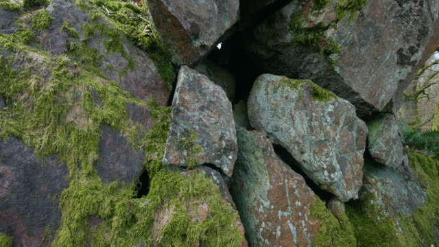 nose-covered rocks in forrest - boulder rock stock videos & royalty-free footage