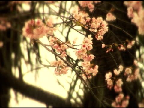 """nostalgy """"sakura"""" - getönt stock-videos und b-roll-filmmaterial"""