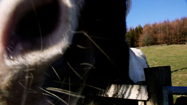 nosy farm horse - nosy stock videos and b-roll footage