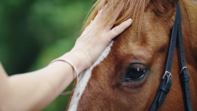 vídeos de stock, filmes e b-roll de não apenas um animal, você é meu melhor amigo - confiança