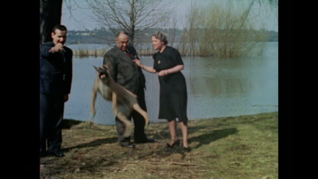 from eva braun's home movie collection - boxer dog stock videos & royalty-free footage