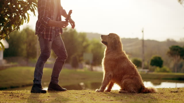 vídeos de stock e filmes b-roll de nothing inspires happiness like time spent with your dog - apanhar comportamento animal