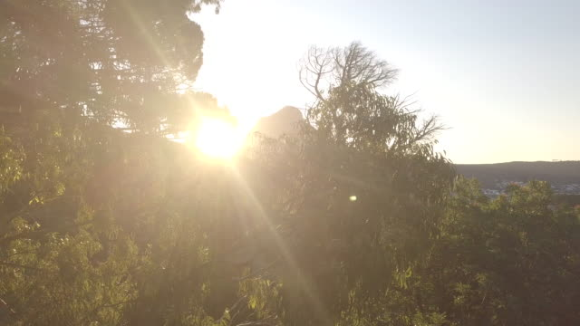 nothing is more beautiful than the woods during sunset - plant bark stock videos and b-roll footage