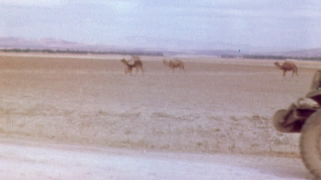 november 1942 u.s. army half-track driving past camel convoy in the desert / algeria - 1942年点の映像素材/bロール