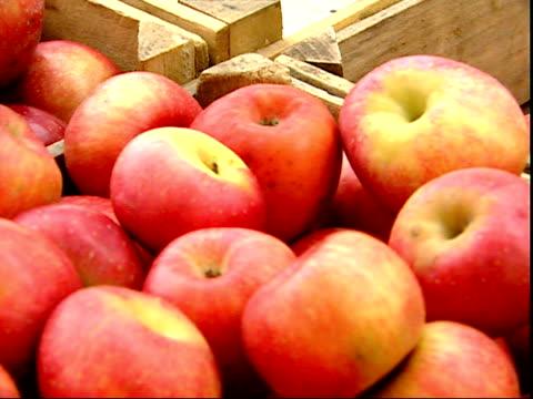 november 20, 2007 montage man shopping for apples at a farmer's market / mt. vernon, virginia, united states - バージニア州マウントヴァーノン点の映像素材/bロール