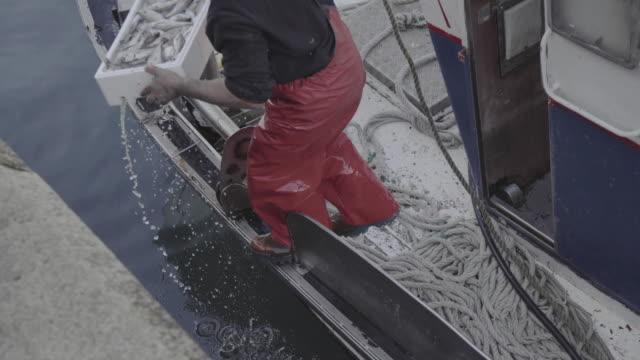 november 27th, 2015. fishing industry in vigo, galicia, spain. fishermen unloading boxes full of fish from the boat - 魚介類点の映像素材/bロール